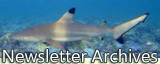 blacktip shark under water, click to jump to Newsletter Archives