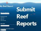 link to reef reports page